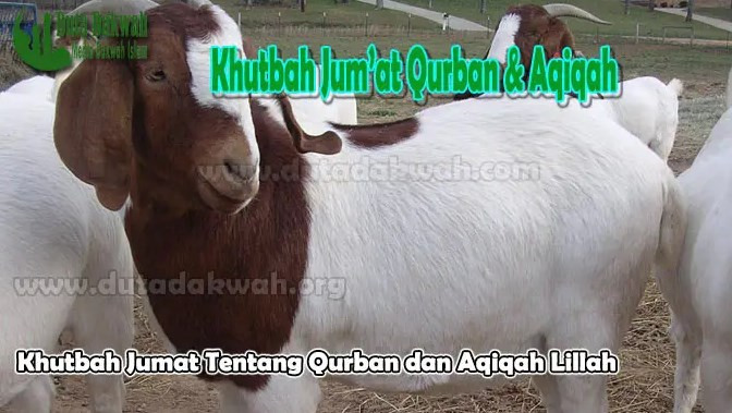 Keutamaan-Tentang-Qurban-dan-Aqiqah-Lillah