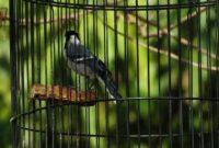 Cara-Menjinakkan-Burung-Liar